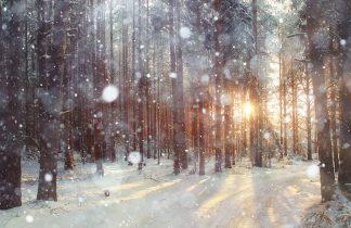 forêt enneigée au coucher du soleil